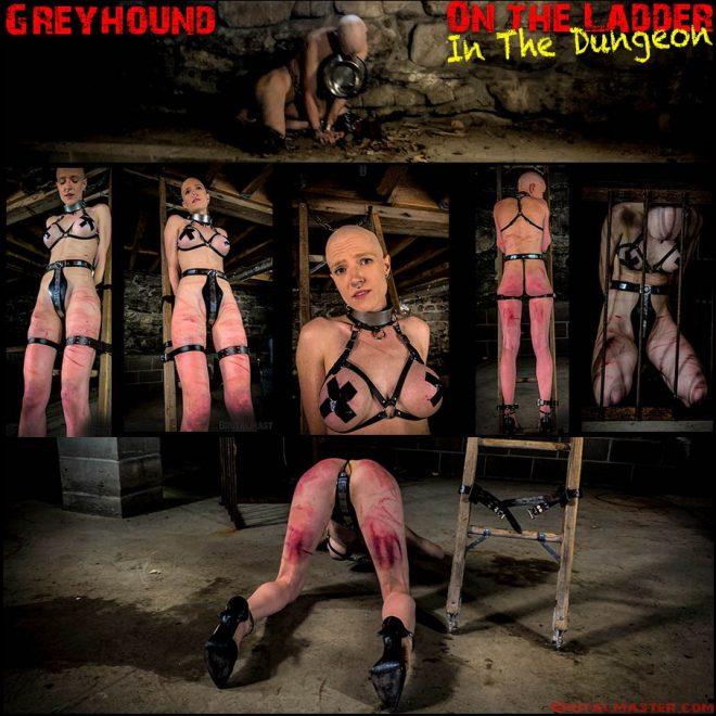 Brutal Master: Greyhound – On The Ladder In The Dungeon