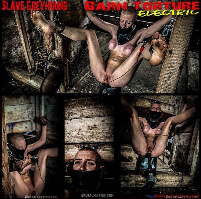 BrutalMaster: Slave Greyhound Barn Torture Electric
