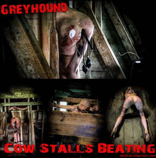 Brutal Master: Greyhound – Cow Stalls Beating